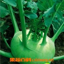 果蔬百科 球茎甘蓝的营养价值和功效